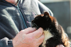 Katt i händerna av en man Royaltyfri Fotografi