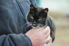 Katt i händerna av en man Arkivfoto