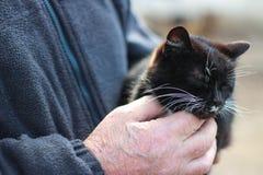 Katt i händerna av en man Arkivbilder