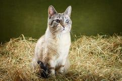 Katt i höet Royaltyfri Fotografi