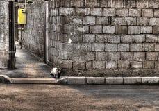 Katt i handling Arkivbilder