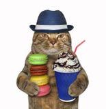 Katt i hatt med kaffe och kex arkivbild