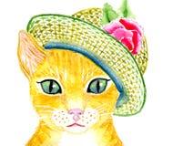 Katt i hatten Fotografering för Bildbyråer