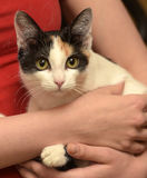 Katt i henne armar Royaltyfria Bilder