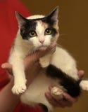 Katt i henne armar Fotografering för Bildbyråer