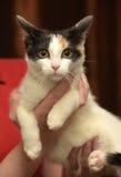 Katt i henne armar Arkivfoto