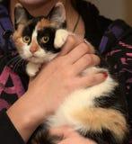 Katt i henne armar Arkivbilder