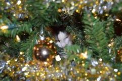 Katt i julgran Arkivfoton