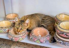 Katt i keramisk stall Arkivfoton