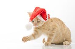 Katt i klocka av Santa Claus Fotografering för Bildbyråer