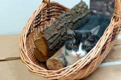 Katt i korg av vedträt Royaltyfria Bilder