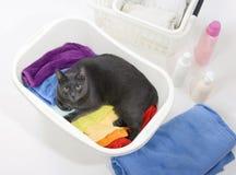 Katt i korg med den färgrika tvätterit som ska tvättas Royaltyfri Fotografi