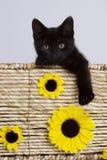 Katt i korg med solrosor arkivfoton
