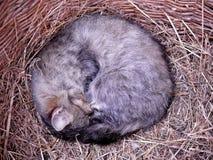 Katt i korgen royaltyfri fotografi