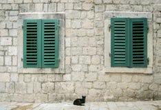 Katt i Kotor, Montenegro Royaltyfria Bilder