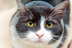 Katt i kottekrage Royaltyfri Bild