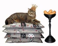 Katt i kronan nära korven royaltyfri fotografi