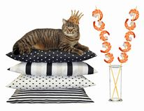 Katt i kronan nära räkasteknålar arkivbilder