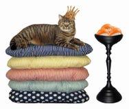 Katt i kronan nära sushi arkivbild