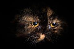 Katt i mörkret Fotografering för Bildbyråer