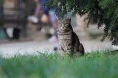 Katt i Milan royaltyfri fotografi