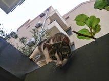 Katt i Montenegro Arkivbild