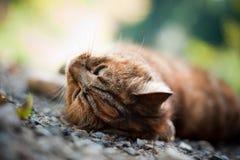Katt i natur Arkivfoton