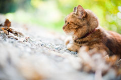 Katt i natur Fotografering för Bildbyråer