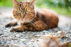 Katt i natur Arkivfoto
