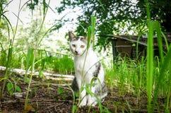 Katt i natur Royaltyfri Bild