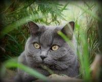 Katt i naturen Royaltyfria Bilder