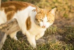 Katt i naturen, grönt gräs Arkivbilder