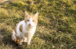 Katt i naturen, grönt gräs Arkivfoton