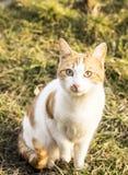 Katt i naturen, grönt gräs Royaltyfria Foton