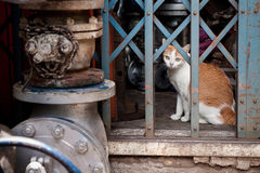 Katt i ousen royaltyfri bild