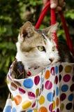 Katt i påsen. Royaltyfri Fotografi