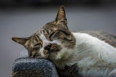 Katt i parkera Arkivfoton