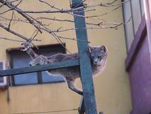 Katt i posera Arkivbild