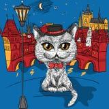 Katt i Prague, Prague slott och Charles Bridge Royaltyfri Fotografi