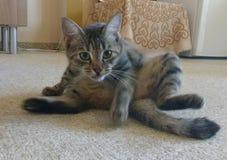 Katt i rörelse royaltyfri fotografi