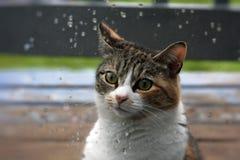 Katt i regnet Arkivbild