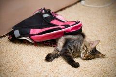 Katt i ryggsäck royaltyfria bilder