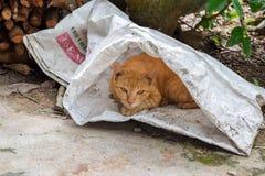 Katt i säcken Arkivbilder