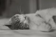 Katt i säng Royaltyfria Foton