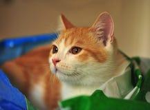 Katt i säng Arkivbild