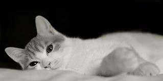 Katt i säng Arkivfoto