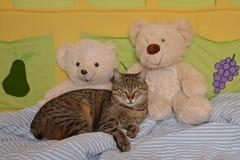 Katt i sängen Arkivfoto