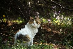 Katt i skog Royaltyfri Fotografi