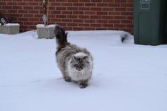 Katt i snö arkivfoto