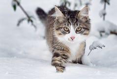 Katt i snö Royaltyfria Bilder